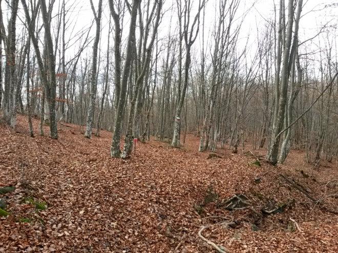 bosco_novembre2