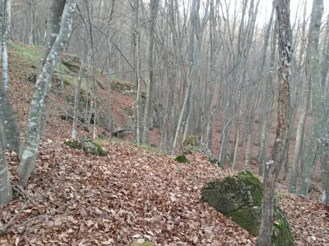 bosco_novembre5
