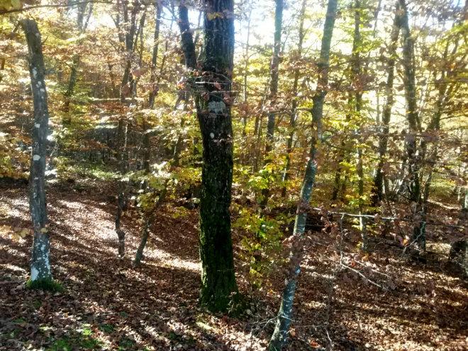 bosco1