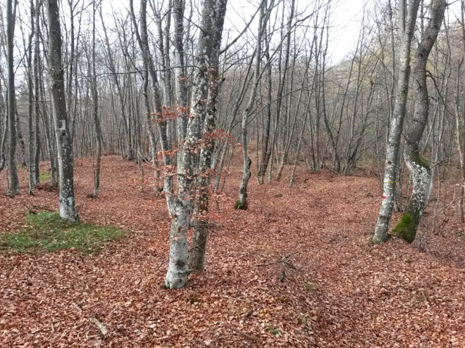 bosco_novembre3